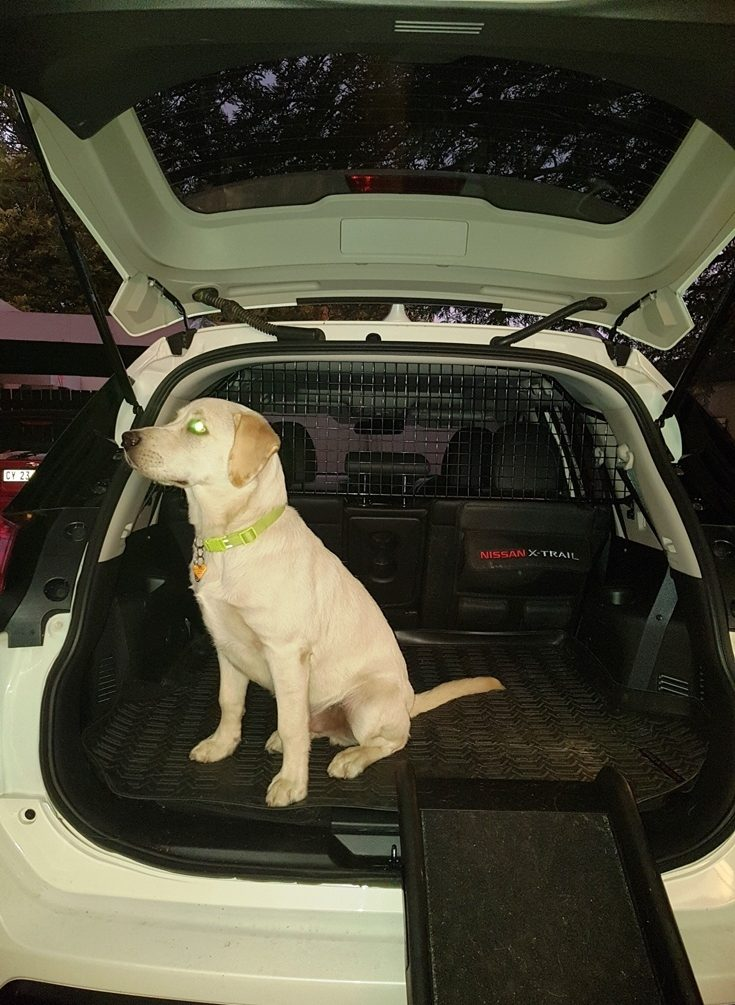 Nissan X Trail For Dogs >> Nissan X Trail Launched Their Facelifted Version With A